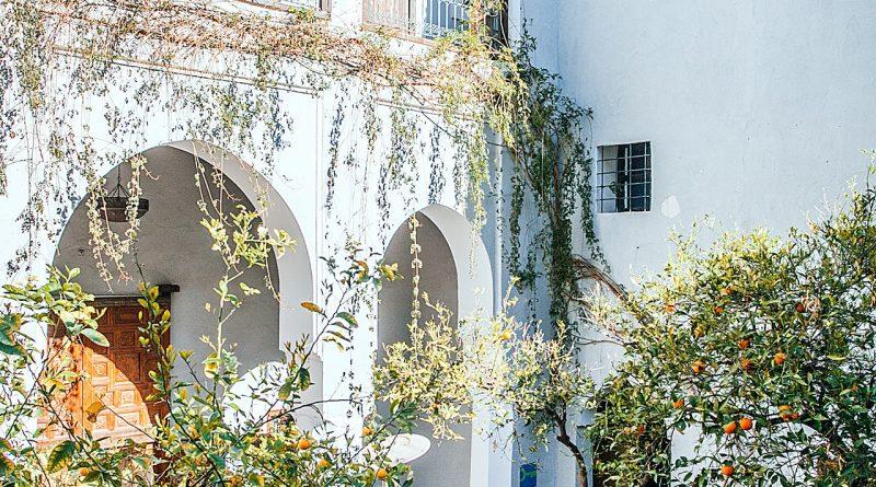 Mur couvert de plantes
